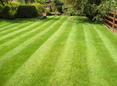 Genopliv græsplænen efter vinteren