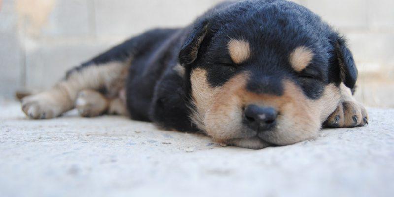 15 tips til en fantastisk nattesøvn